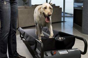 Dog Tread For Larger Breeds