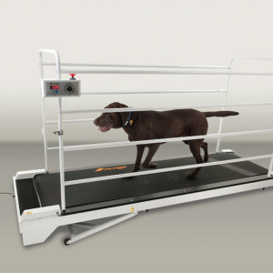 GoPet Giant Breed Dog Treadmill